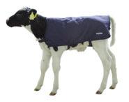 Calf Blanket EasyWear