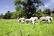 Schafnetze (3)