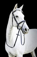 Bridles & Accessories (8)
