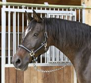 Head-Collar Mustang