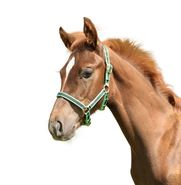 KERBL Exclusif Licol pour Cheval Vert Taille 1