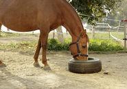 Tyre Trough