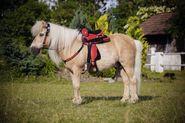 Westernsattel-Set Pony