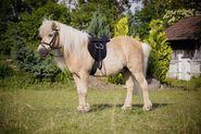 Sattelset Pony Economy