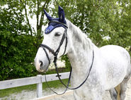 Fly Mask Covalliero Collection