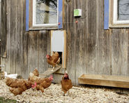 Automatic Chicken Door