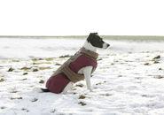 Dog Coat Royal Pets