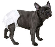 Canine nappies