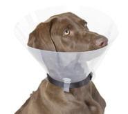 Dog Surgical Collar
