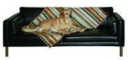 Dog Blanket Calimero