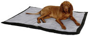 Dog Blanket Trip