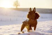 Hundemantel Kitzbühel