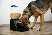 Electronic Pet Feeder Dry Food Dispenser