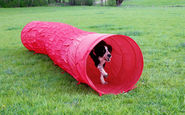 Agility Dog Tunnel