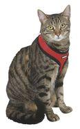Cat Harness Activ