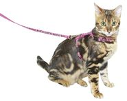 Katzengeschirr mit Leine