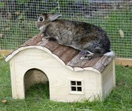 Rodent cabin with gently curved roof Nature