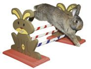 Agility Rodent Obstacles