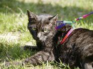 Cat Harness Rainbow