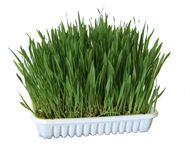 Rodent Grass