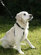 Hundegeschirr Maxi Leader