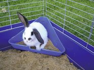 Corner Litter Box for Rodent Cages