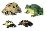Frösche/Schildkröten