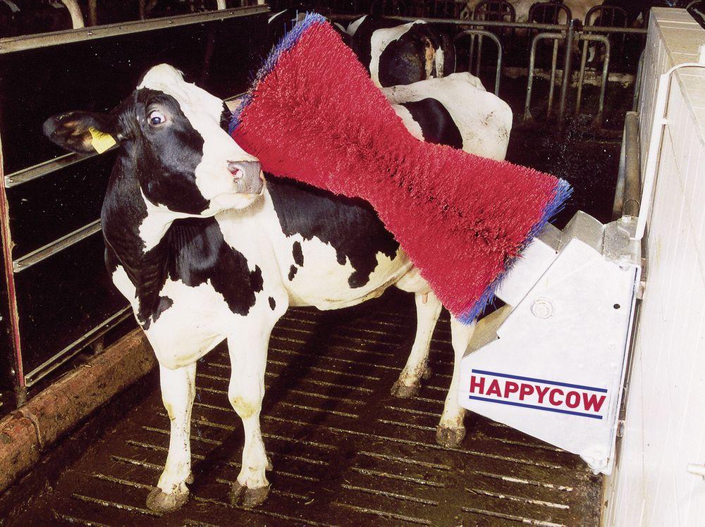 happy cow machine gif
