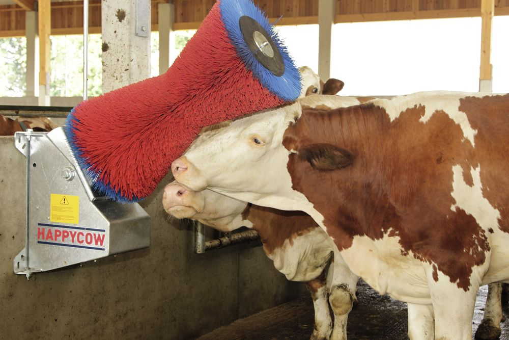 Cow Cleaning Machine HAPPYCOW - Cattle Breeding and Cattle Farming